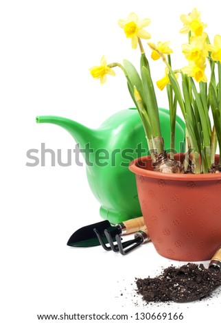 Daffodils and gardening tools isolated on white - stock photo