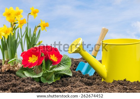 Daffodils and primroses with a watering can and a shovel - stock photo