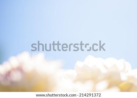 Dahlia flowers with sky background, light, defocus - stock photo
