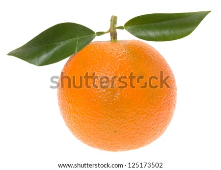 Daidai, Asian variety of bitter orange (which is also known as Seville orange, sour orange, bigarade orange, and marmalade orange)