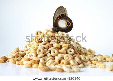 Daily 6: This butterfly takes in all 6 of his recommended daily servings of the bread/cereal/grain food group (he even resembles the Cheerios!). Creative twist on diet, health, and nutrition. - stock photo