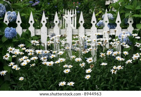 daisies and hydrangeas growing along white picket fence - stock photo