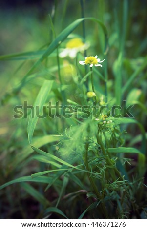 daisies in the paths among the green grass in the garden