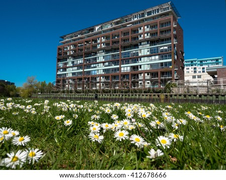 daisies meadow in front of a modern house - stock photo