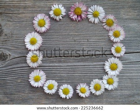 daisies on a wooden background - stock photo
