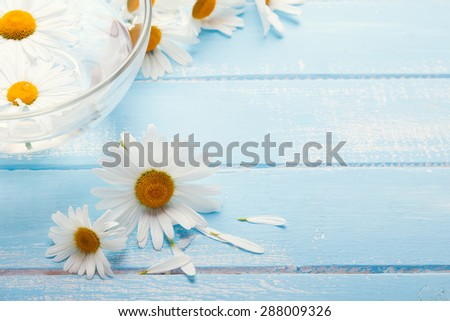 Daisies on the blue wooden table close-up
