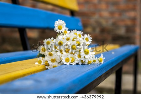 Daisies on yellow and blue bench - stock photo