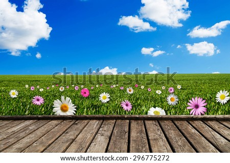 daisy and pink flower field - stock photo