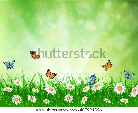 daisy background summer design flower green garden nature illustration. Spring background with grass and butterfly, daisies and bokeh lights. Raster version - stock photo