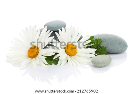 Daisy camomile flower and sea stones. Isolated on white background - stock photo