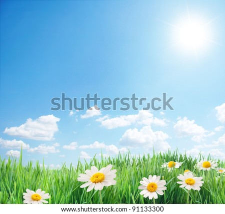 Daisy field in the sunny summer day. - stock photo