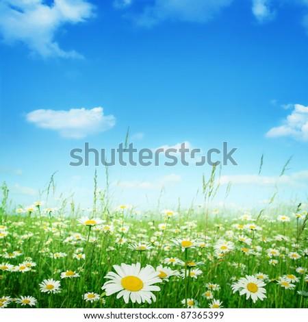 daisy field mountain sky - photo #20