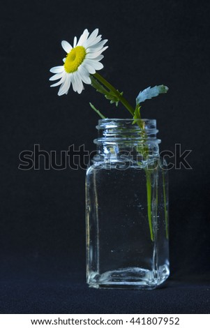 daisy flower in a vase on a black background - stock photo