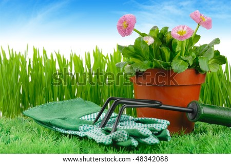 Daisy flowers and garden tools on meadow