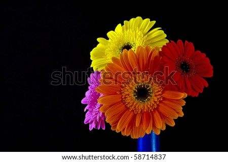 Daisy flowers in blue vase - stock photo