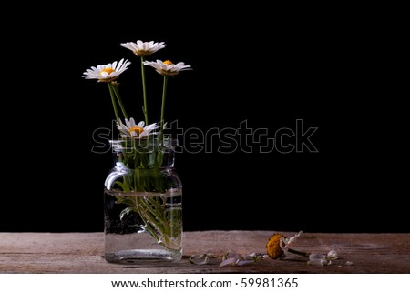 Daisy flowers in glass on black background studio shot - stock photo