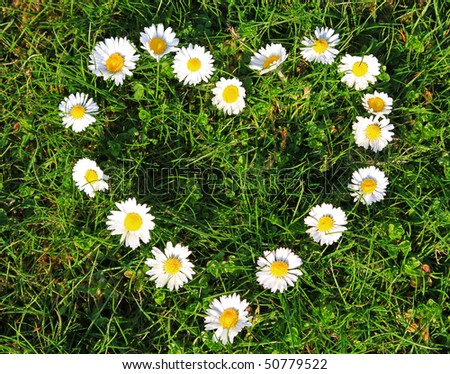 daisy flowers heart shape stock photo   shutterstock, Beautiful flower