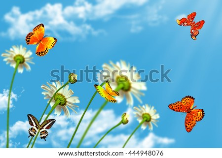 daisy flowers on blue sky background. butterfly - stock photo