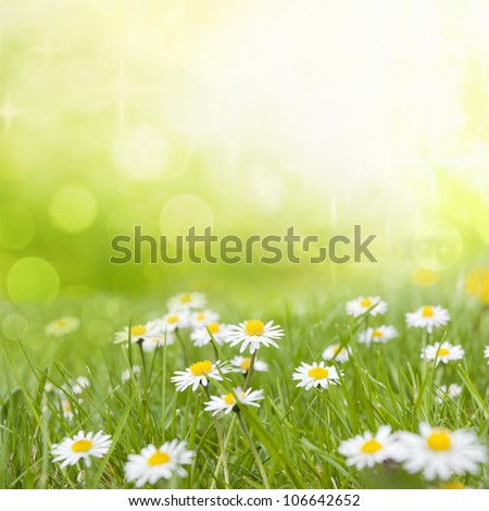 Daisy flowers on meadow in green grass abstract background floral design