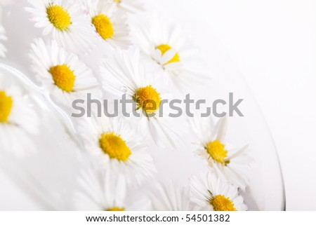 Daisy flowers on white background studio shot - stock photo