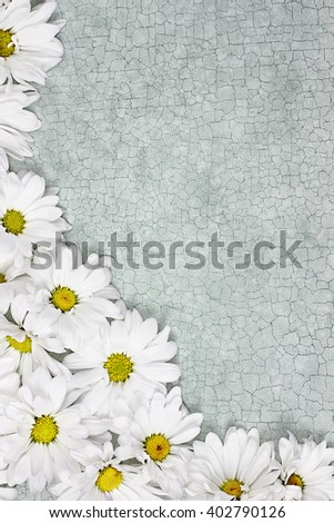 Daisy flowers over green craquelure background with room for your text. - stock photo