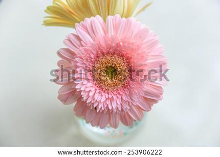 daisy-gerbera in glass vase - stock photo