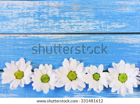 Daisy  in the cracks of  wooden background in a Sunny day with copy space - stock photo