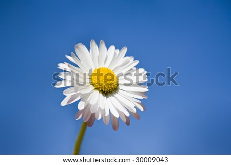 Daisy on a background of the sky