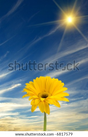 Daisy, sun, and blue sky