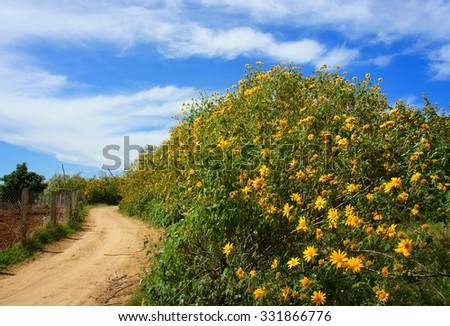 Dalat countryside in autumn season, green landscape with tree, sky, bush of da quy flower, a special flower of Da Lat, Vietnam
