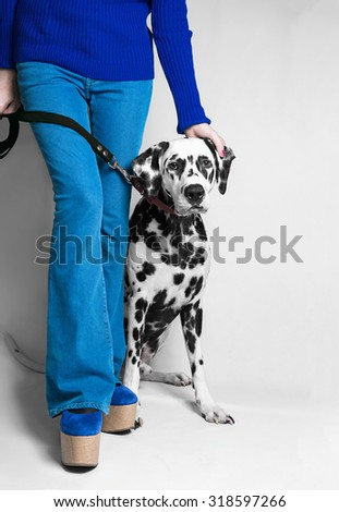 Dalmatian dog sits on a leash near the feet of his mistress dressed in blue jeans in the studio - stock photo