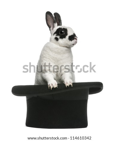 Dalmatian Rabbit standing in magician's top hat, against white background - stock photo