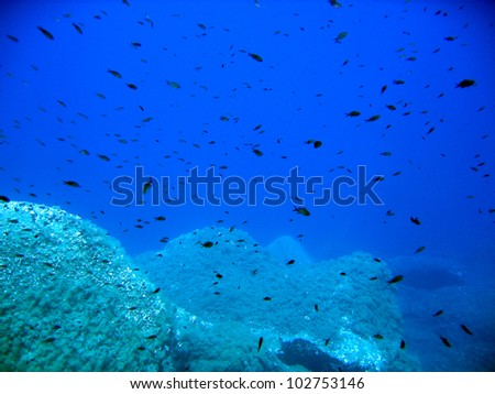 Damselfish in the deep - stock photo