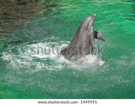 dancing dolphin - stock photo
