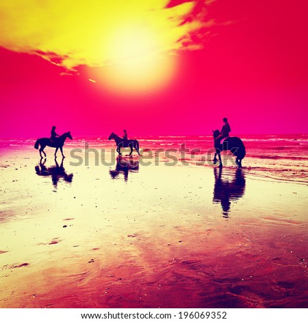 Dancing Horses on the North Sea Coast in Netherlands, Sunset, Retro Effect - stock photo