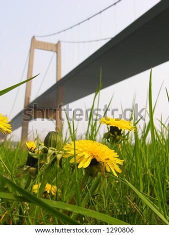 Dandelion and Suspension Bridge - stock photo