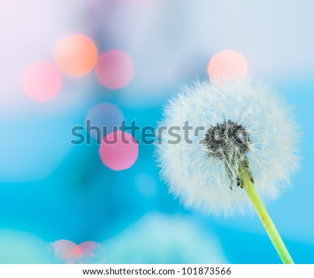 Dandelion and the colorful lights - stock photo