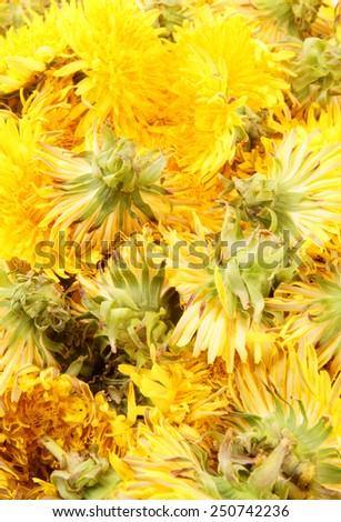 Dandelion background - stock photo