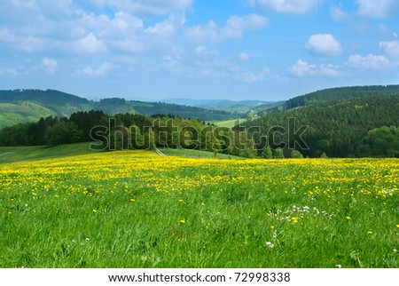 Dandelion field against blue cloudy sky - stock photo