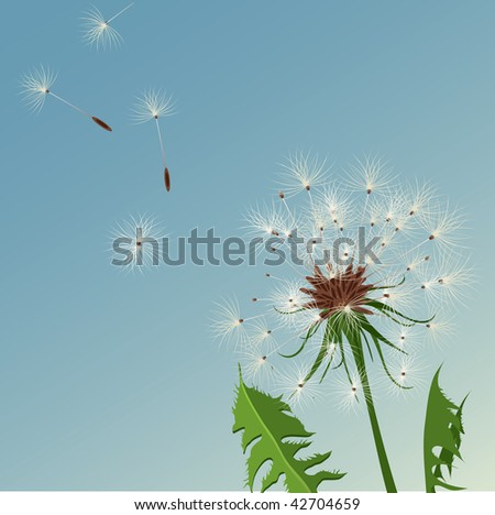 dandelion, flower background