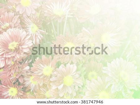 dandelion flower color Filter background for design. - stock photo
