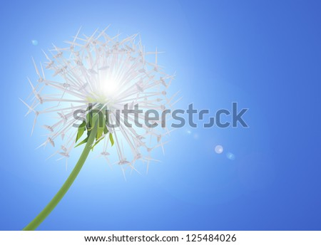 Dandelion flower symbolizes clean energy - stock photo
