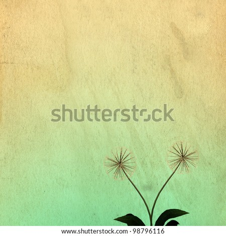 Dandelion for background or texture use - stock photo
