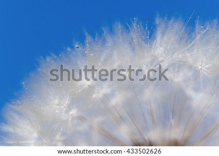 Dandelion on background blue sky