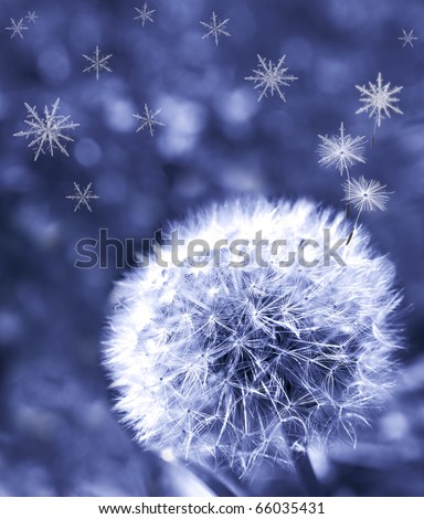 Dandelion on blue blurred background, emitting snowflakes instead of seeds