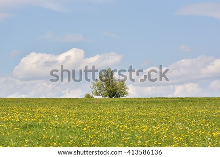 Dandelion on green field and blue sky - stock photo