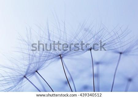 Dandelion on light background, macro - stock photo
