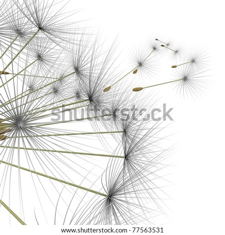 dandelion parachutes by the wind on a white background - stock photo