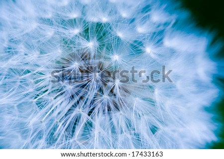 Dandelion seed background macro texture