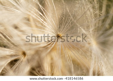 Dandelion seeds blowing away in the wind  - stock photo